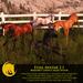 BC Foal Avatar 2.1