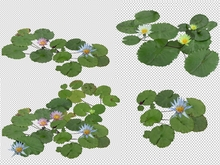 Water lilies & lotus High Quality Alpha  Textures