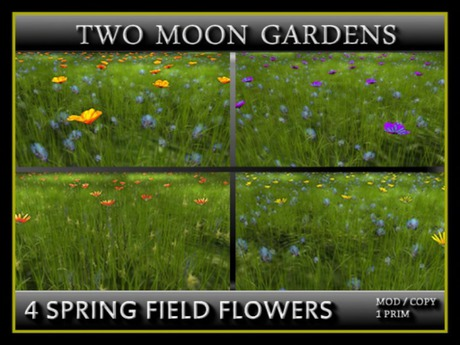 TMG - 4 SPRING FIELD FLOWERS - Meadow Grass for Landscaping
