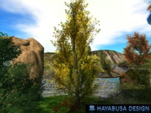 Spring Trees with Wind effect and Flower - Discover Box