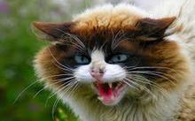 Gesture: Cat Raaaaar!!!