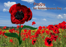 Poppy for Rememberance Day