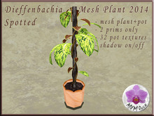 Dieffenbachia Spotted