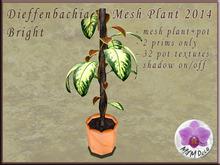 Dieffenbachia Bright