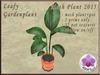 Leafy Garden Plant