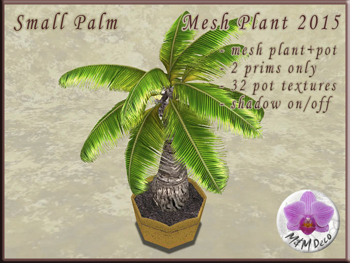 Little Palm