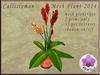 Mesh plant 2015 callistemon