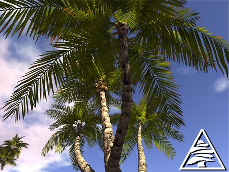 Palm trees MODIFY TRANSFER