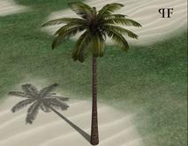 Palm 001