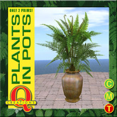 Q Creations - Fern in a Pot