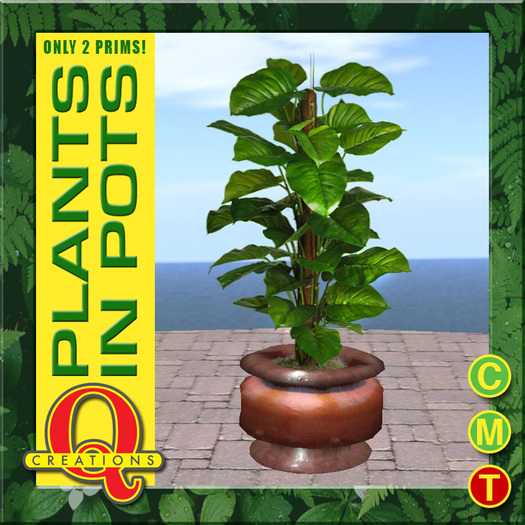 Philodendron Plant in a Pot