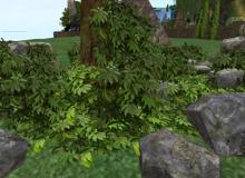 Wild Bushes - Mesh - Full Perm