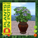 Houseplant 9 by Q Creations