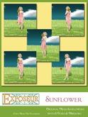 {.:exposeur:.} Sunflower