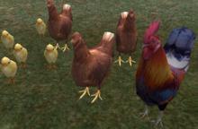 <SIC> Chicken