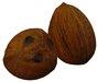 Coconut Sculpty Sculpted 1 prim Hyper Real V2 fruit fruity arts