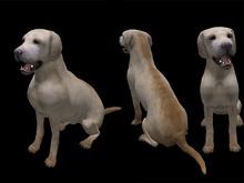 Labrador Sitting - Mesh - Full Perm