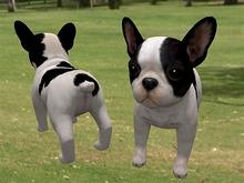 French Bulldog - Mesh - Full Perm