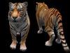 Tiger main