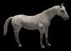 White horse pic 3