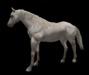 White horse pic 4