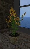 Flowers marguerite yellow