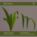 DayWalker Design- Leafs-M/C/T
