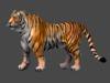 Tiger looking main