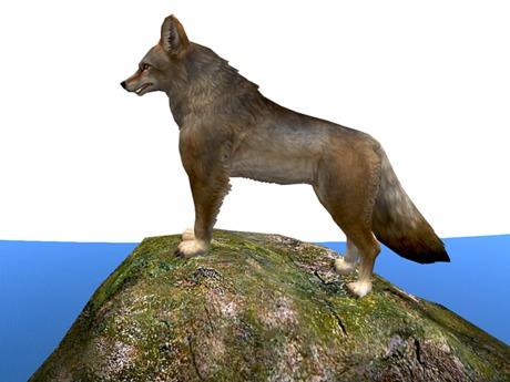 Coyote On A Rock - Mesh - Full Perm