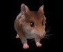 Hamster pic 3