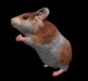 Hamster pic 4