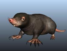 Mole - Mesh - Full Perm