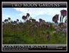 CORNFLOWER BORDER* A Little bit of Landscape