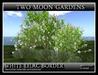 WHITE LILAC BORDER* A Little bit of Landscape