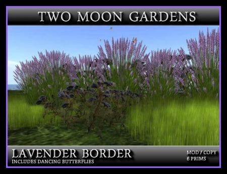 LAVENDER BORDER* A Little bit of Landscape