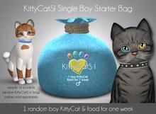 KittyCatS! Single Boy Kitten