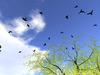 Free-Roaming Crows and Bats
