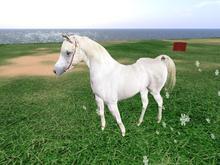 ROAMING SCULPTED HORSE !