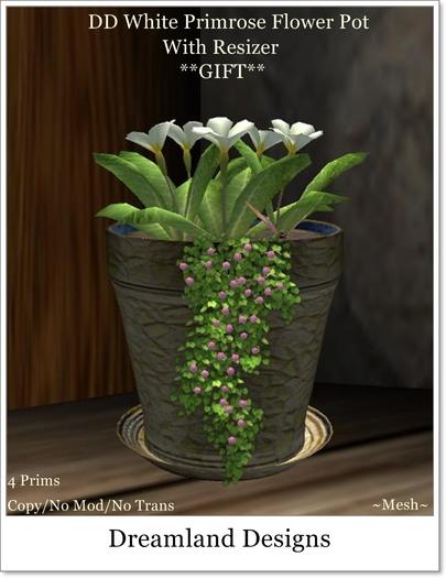 DD White Primrose Flower Pot Boxed
