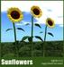 Sunflowers mesh