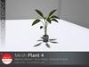 [DD] - FULL PERM  Plant 4