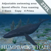 [TomatoPark] Humpback whale