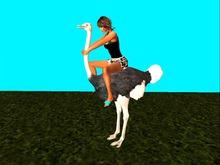 Ostrich to Ride (wear)   Mesh