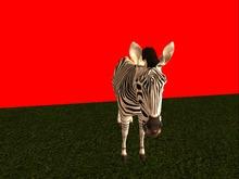 Animated Mesh Zebra Moves in 10x10 area