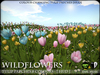 FLOWERS - Tulips - Texture Changing HUD - V2