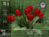 Red Tulips MT