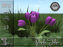 Purple Tulips MC