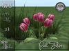 Pink Tulips MC