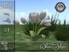 White Tulips MC