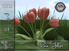 Rose Tulips MC